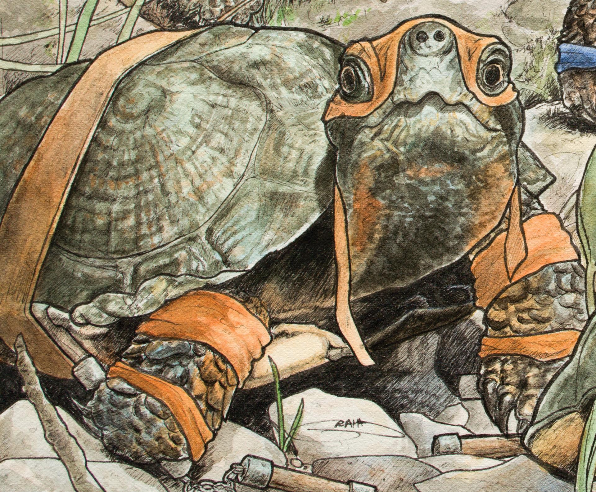 Graham moogk soulis moogk soulis turtles mic