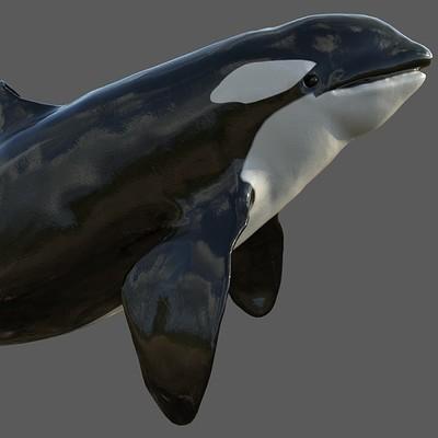 Ladema ipan killer whale 1
