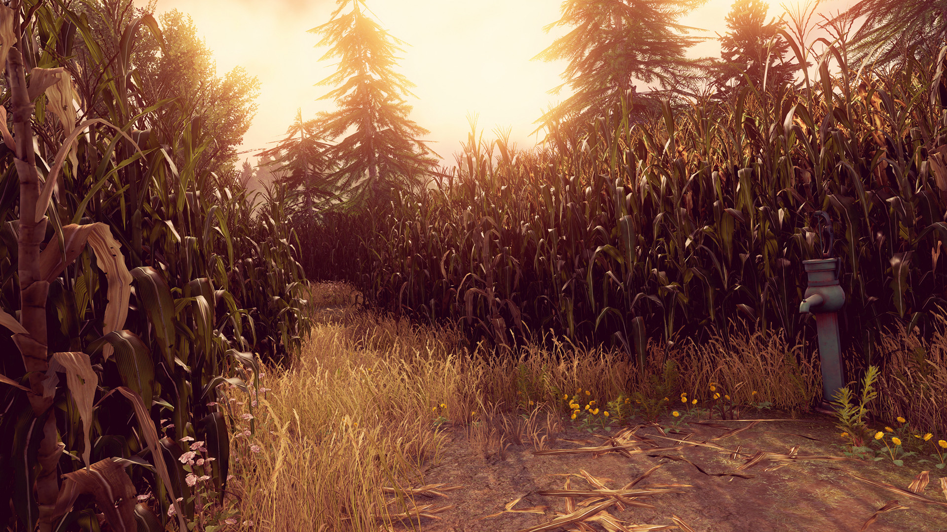 Eddie faria corn