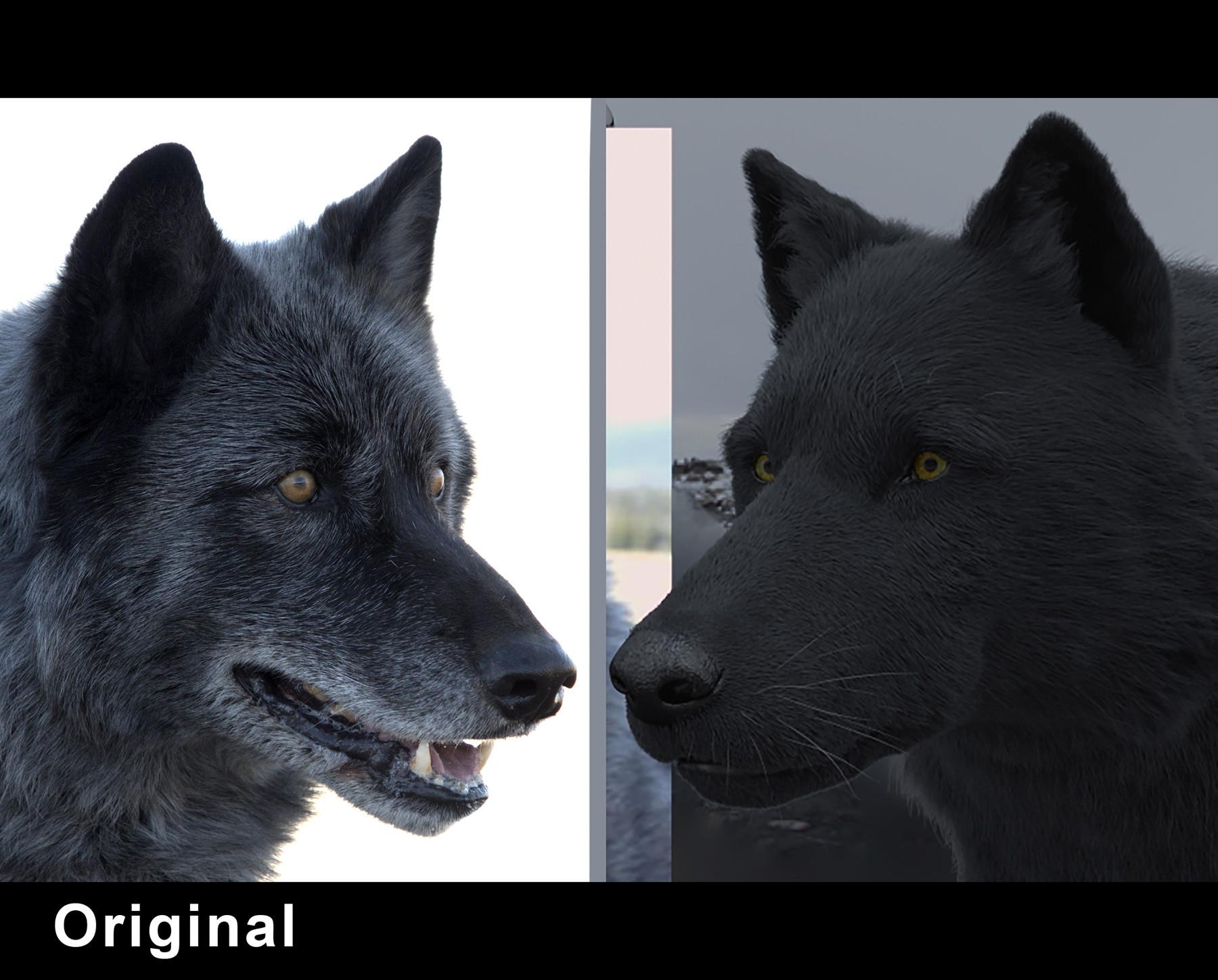 Luis carrasco wolf fur original