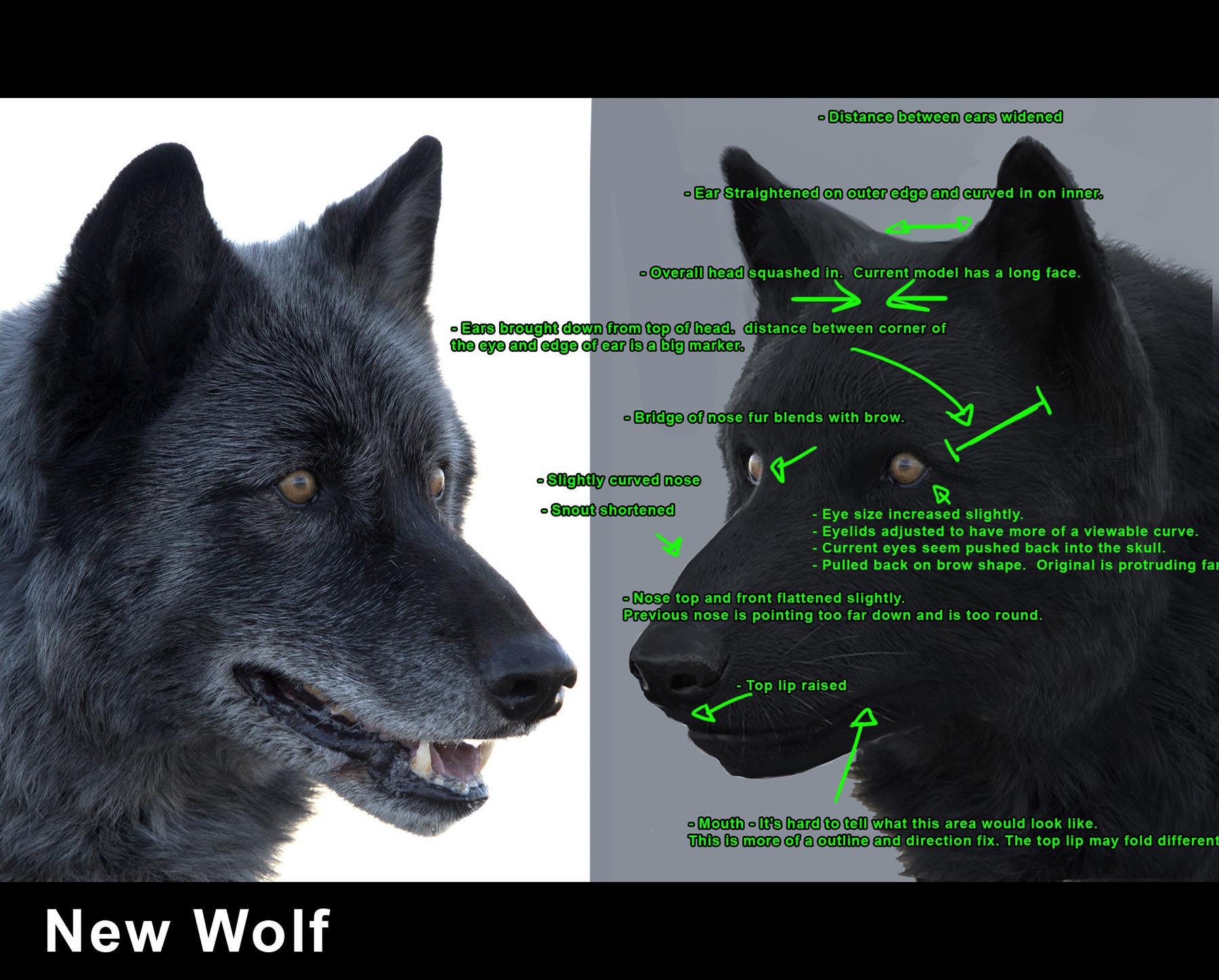 Luis carrasco wolf fur 03 notes