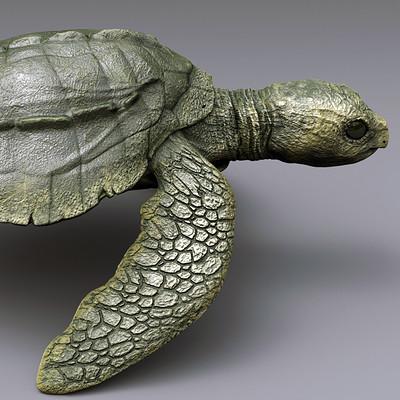 Krzysztof gryzka small turtle