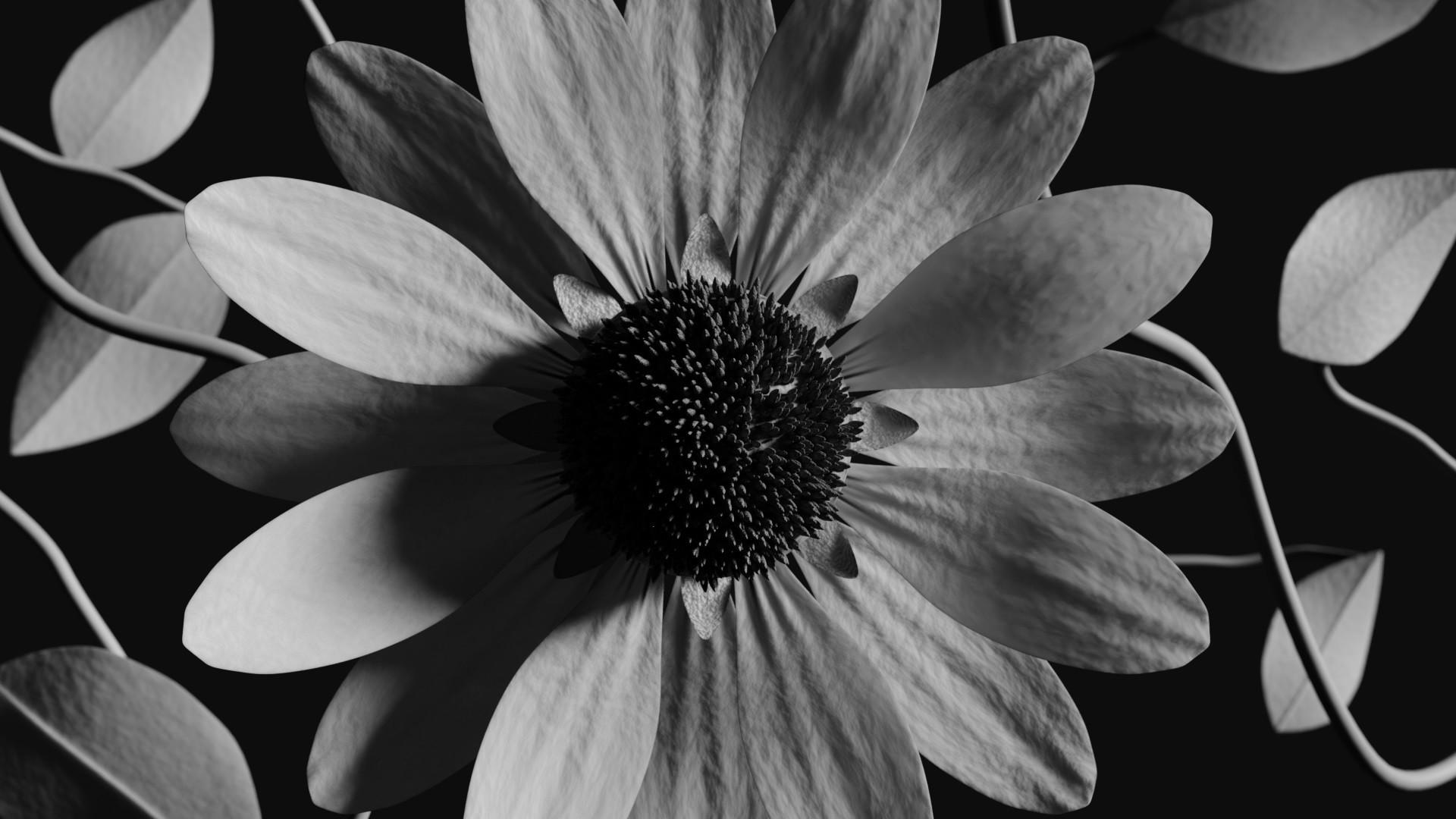 Stephen koehler contrastedflower