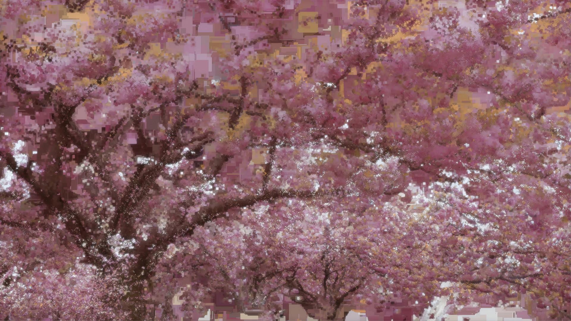 Benjamin bardou 1cherry blossoms no 2 2018