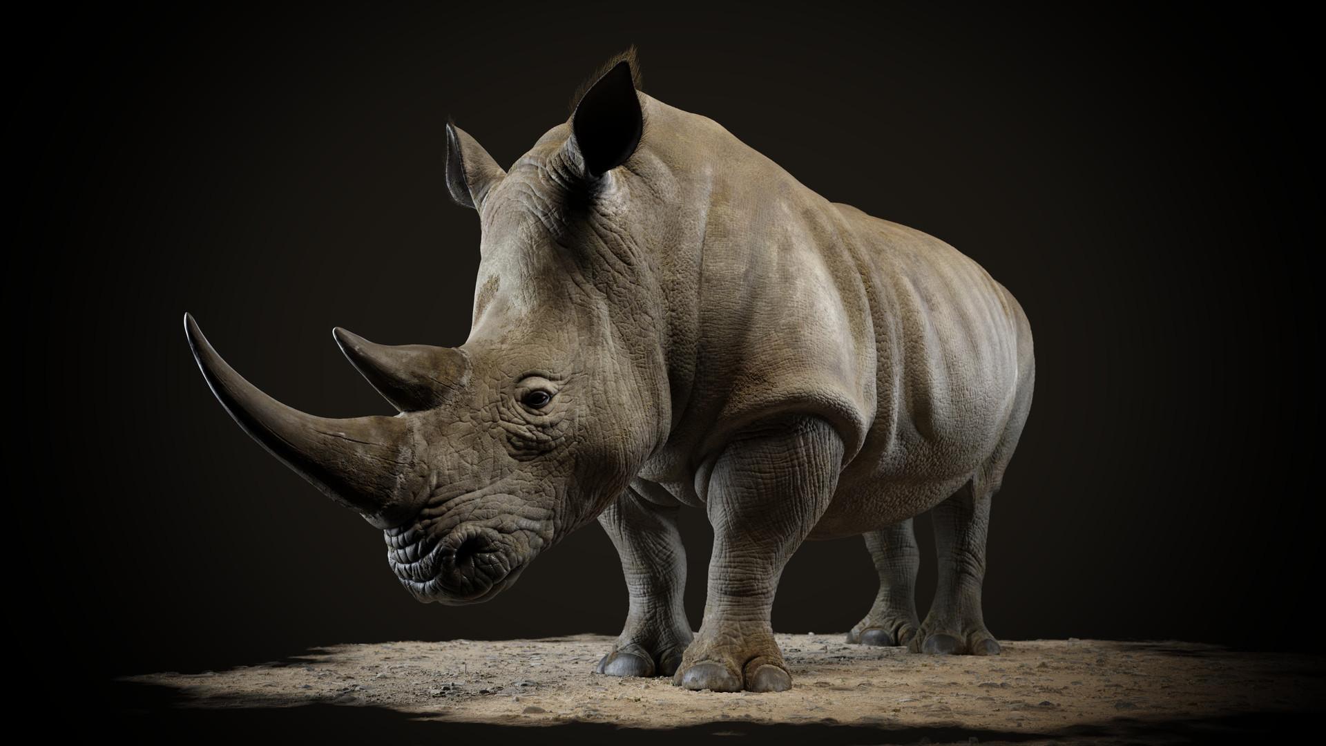Patrick Danneker White Rhinoceros