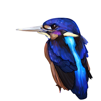 Ines robin birds1