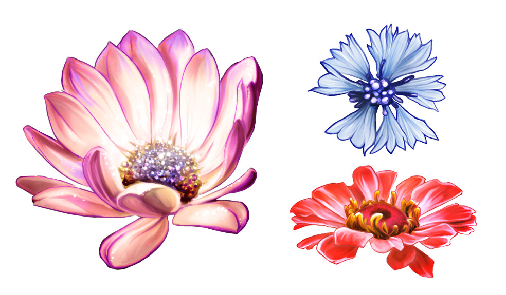 Stylized studies of flowers from different photos.