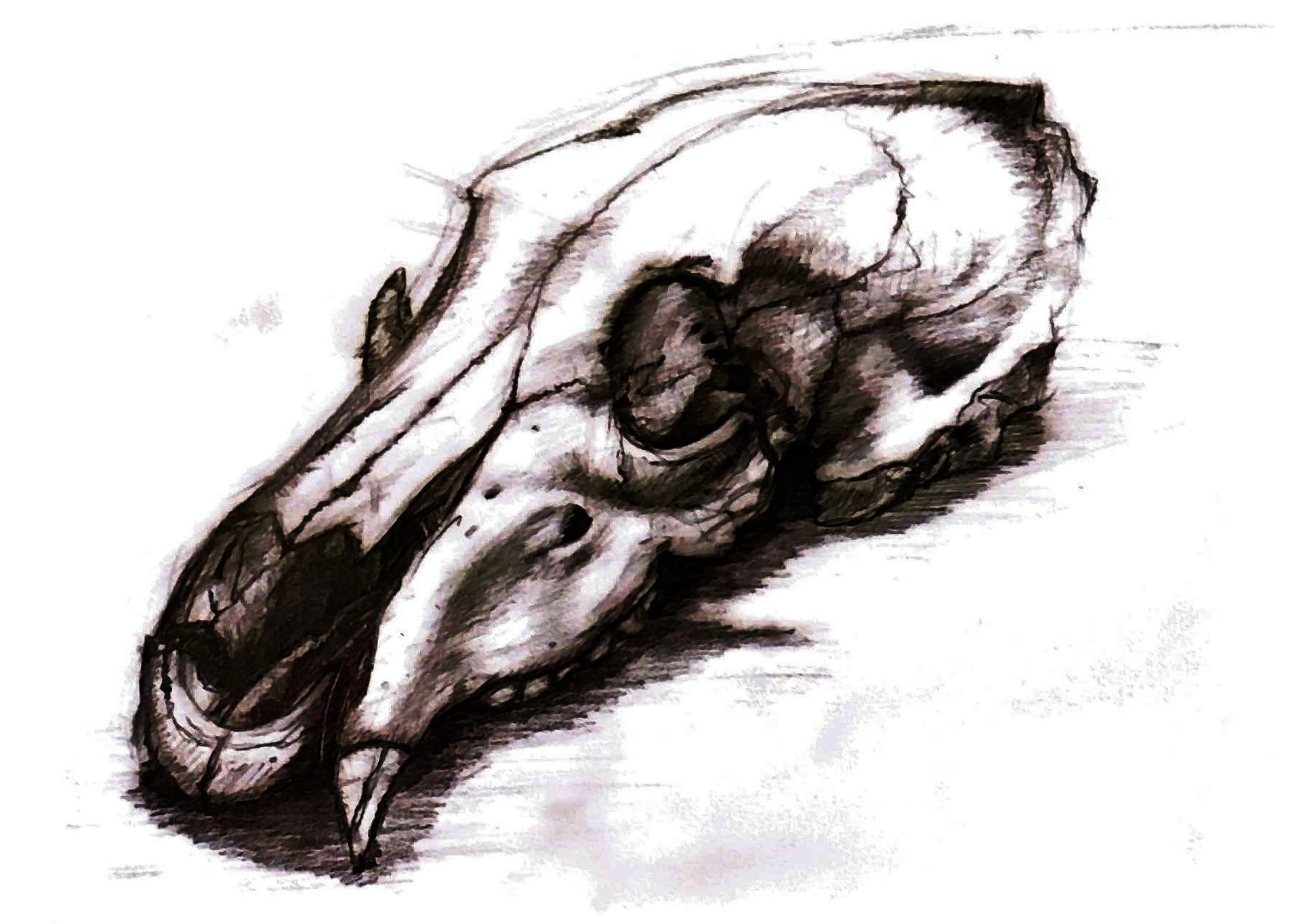 ArtStation - Bear Skull, onur dursun