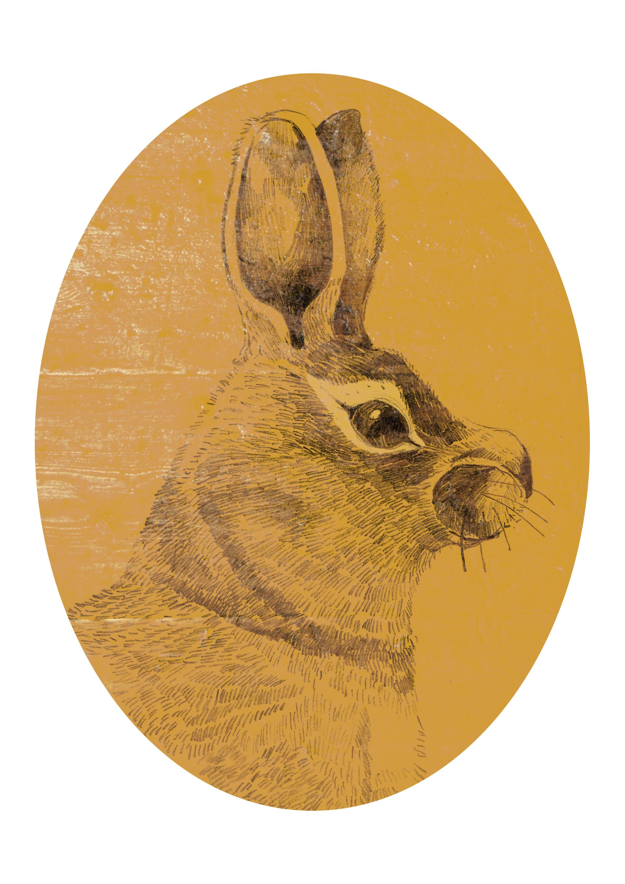 Barok Bunny