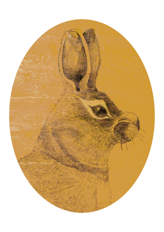 Andy bruyninckx barok bunny