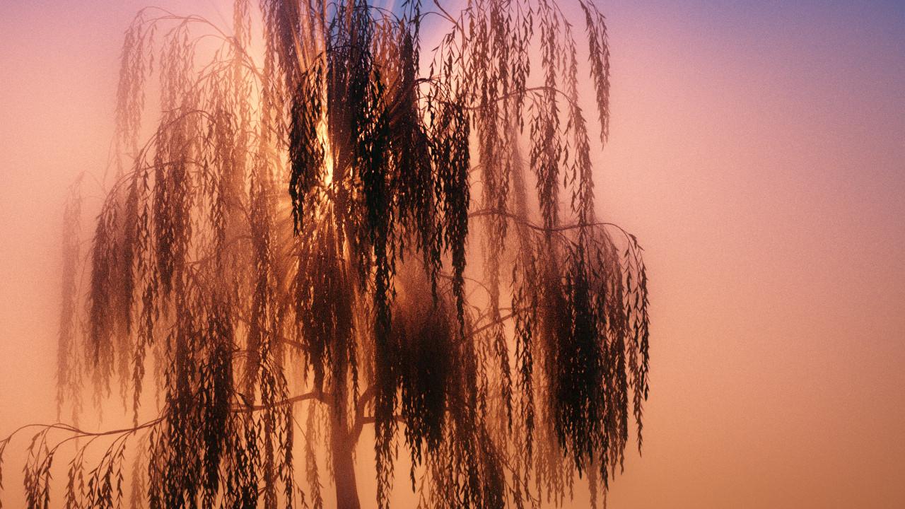 Kris hyde o willows