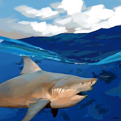 Daryl toh shark