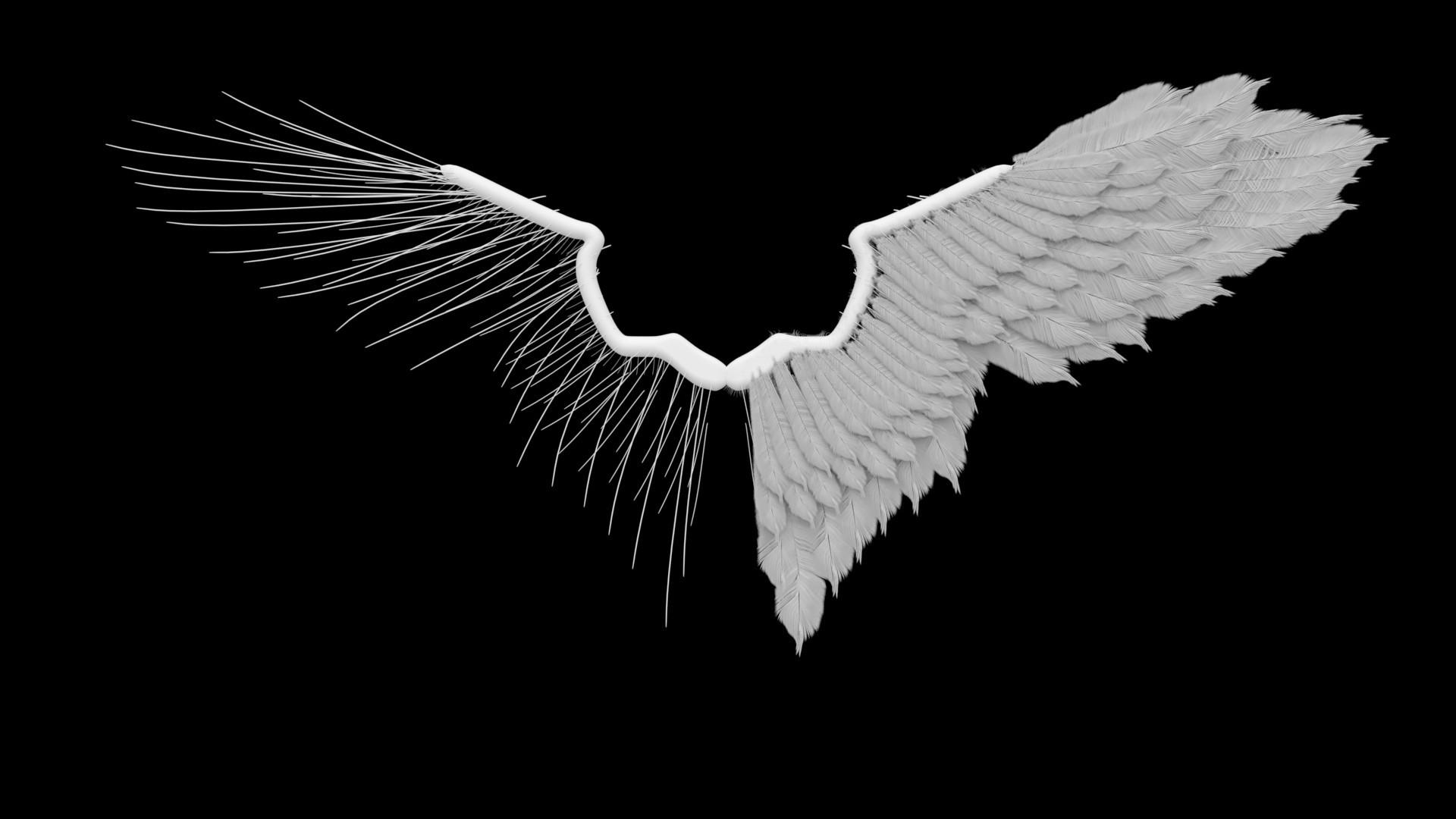 фон с крыльями картинки платяным шкафом
