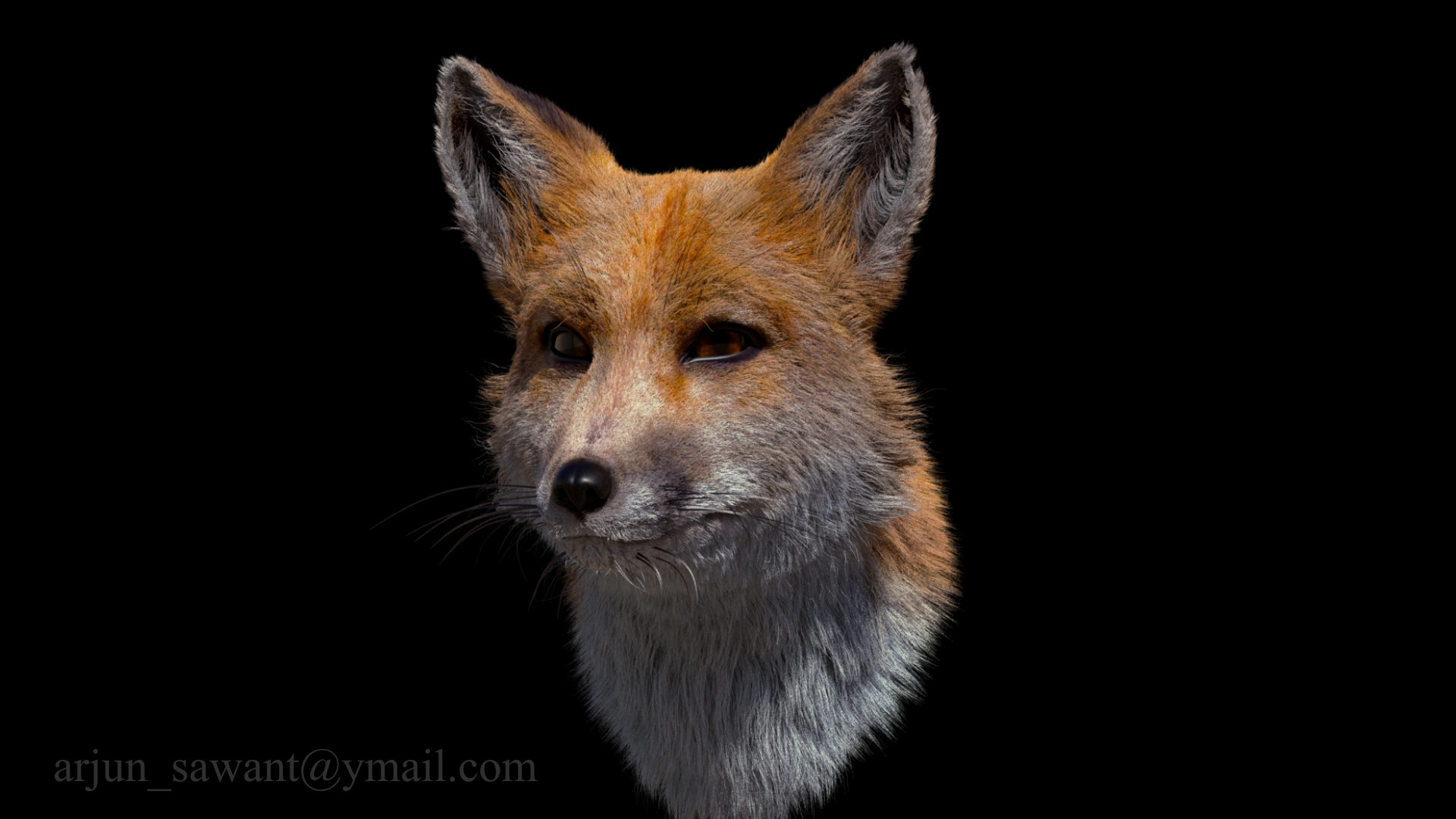 Artstation Fox Head Xgen Fur Grooming Study Arjun Chandrakant Sawant