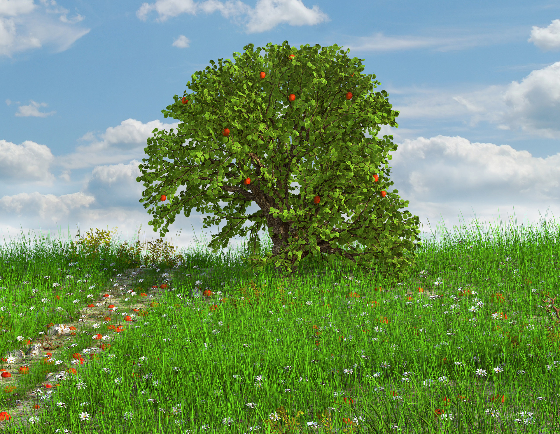 Marc mons meadow2