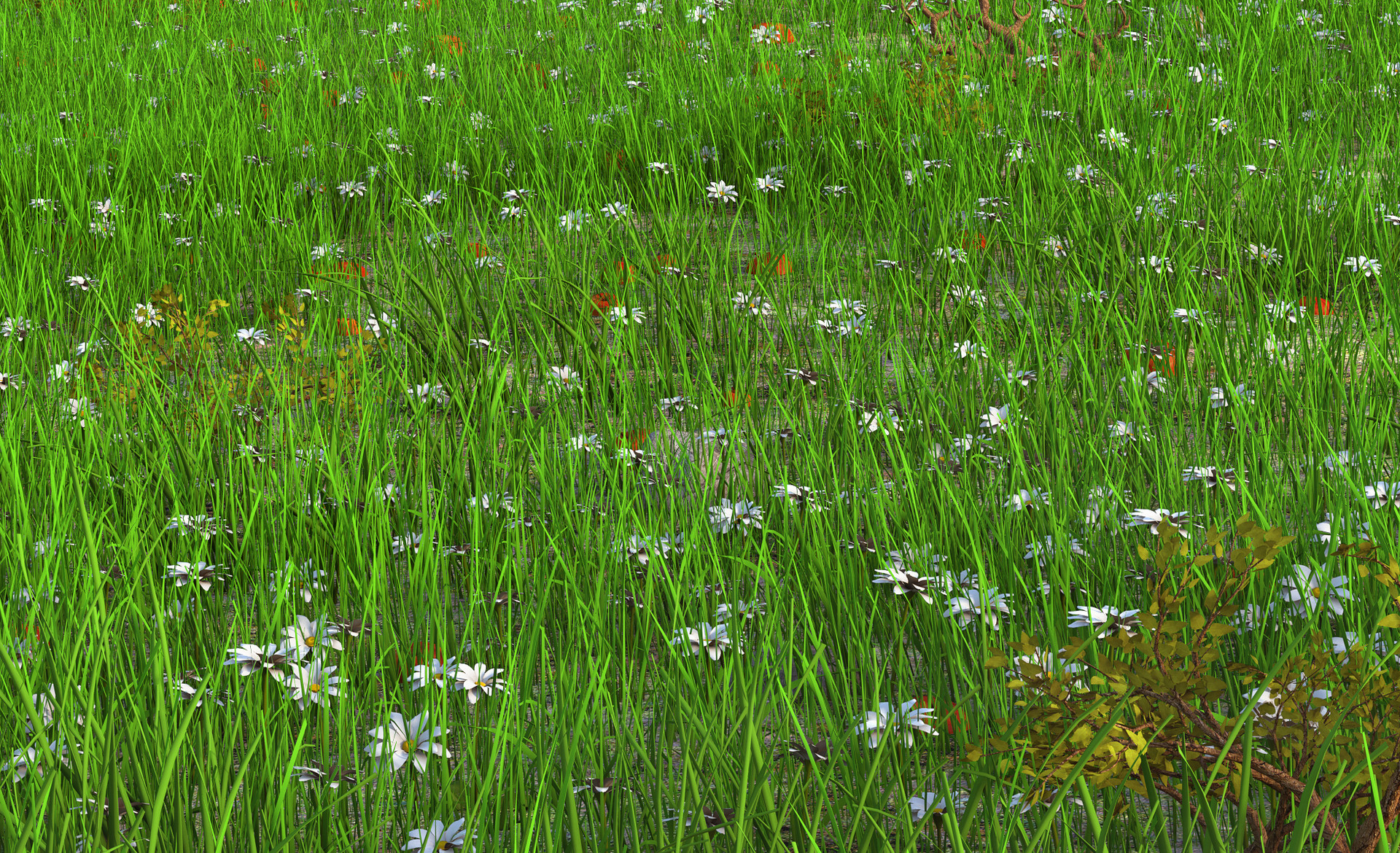 Marc mons meadow3