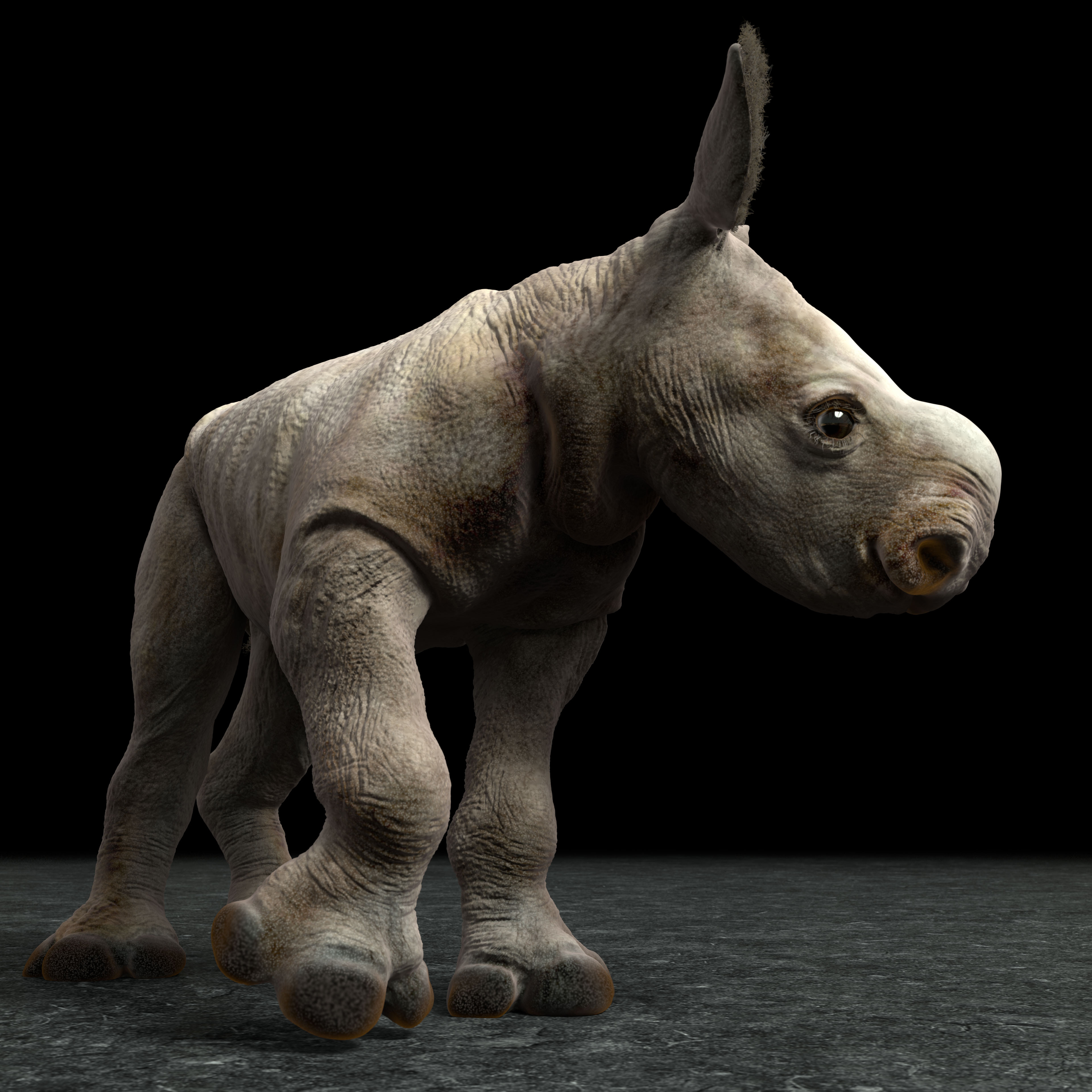 Revisited the white rhino calf after I did the Sumatran. Much better this way.