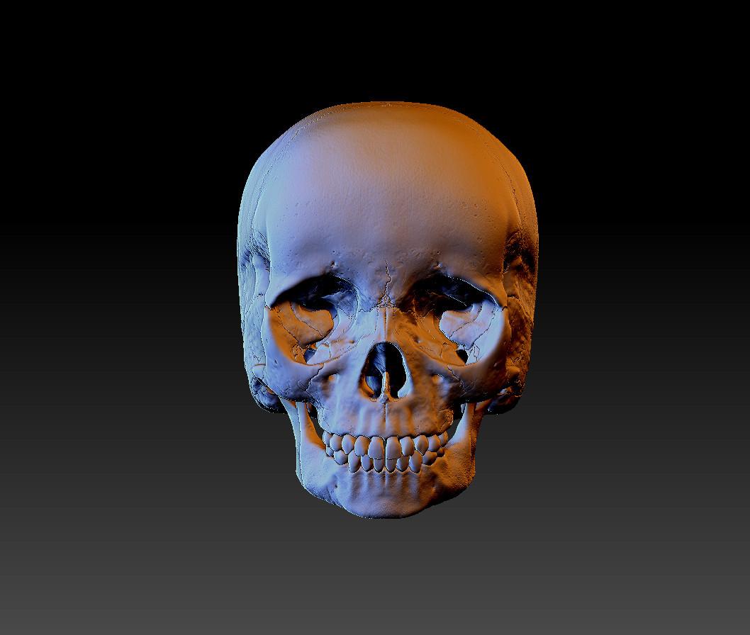 Child Skull Front