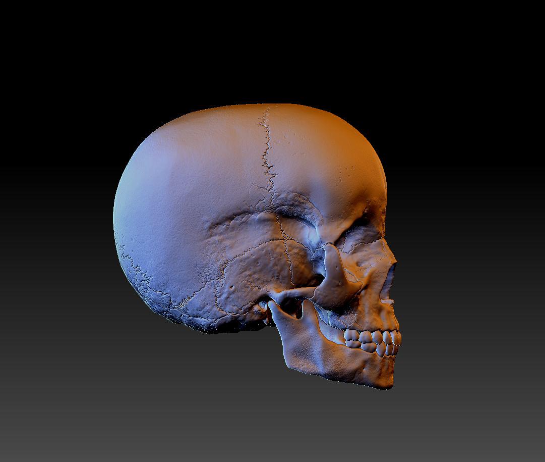 Child Skull Right Side