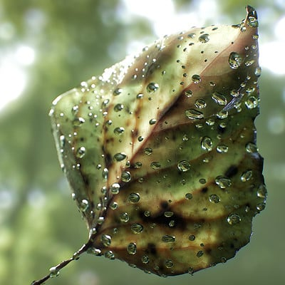 Pete mc nally petemcnally leaf closeup3