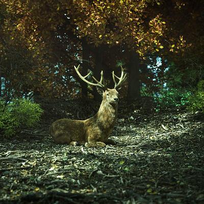 Christoph schindelar ff14 deer demo v01