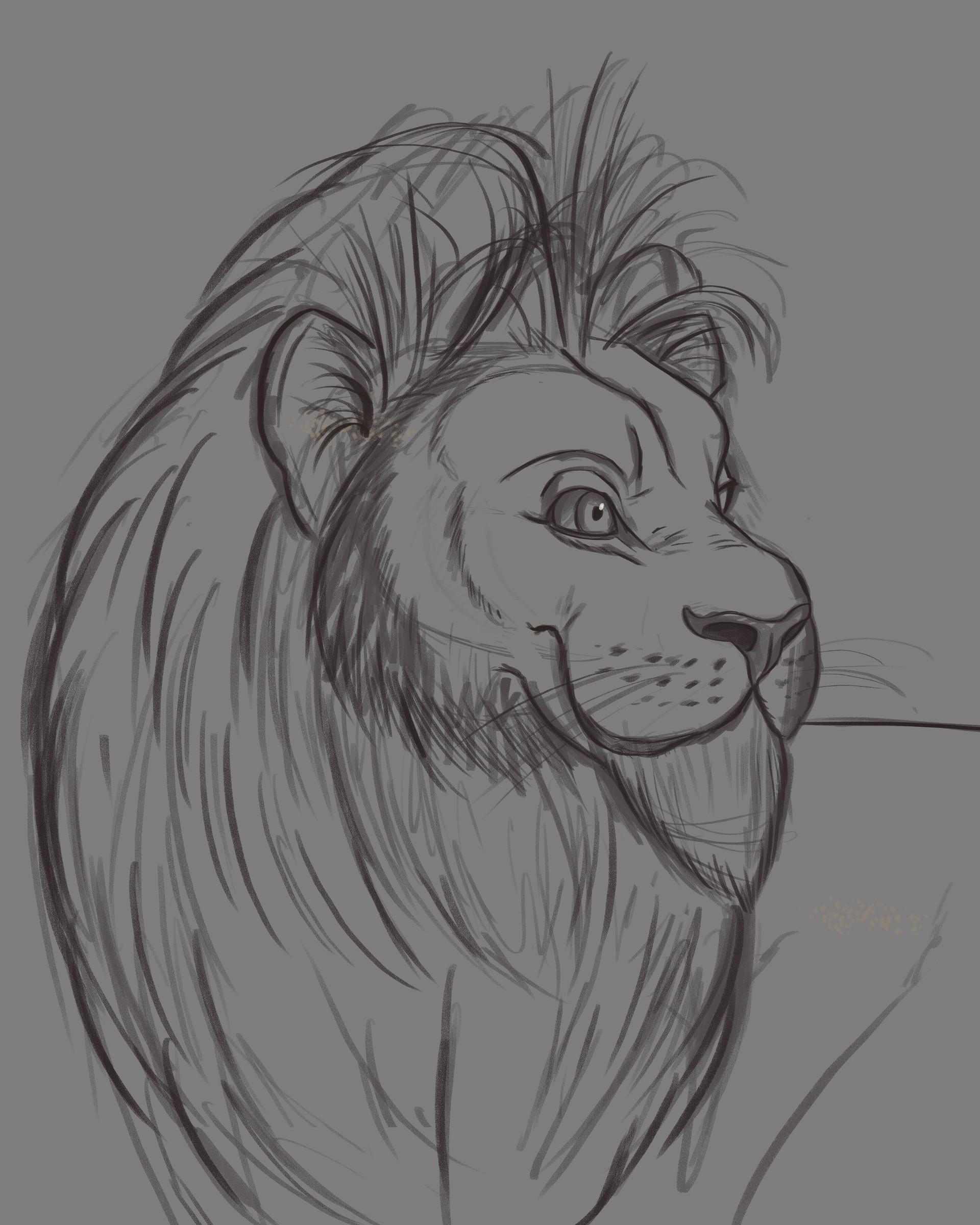 Rafael andrade lion illustration sketch