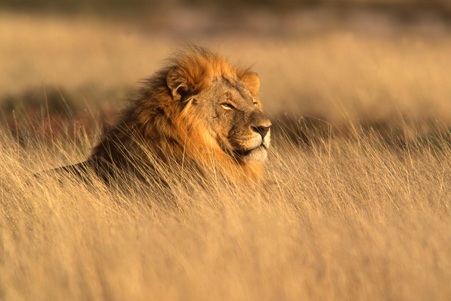 Rafael andrade lion day1