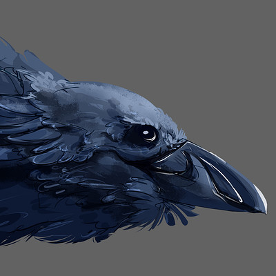 Laura greve corvid dragon
