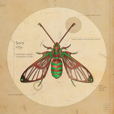 Barbora urbankova bugs