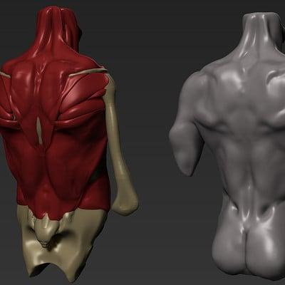 Christian bull anatomycheatsheet back