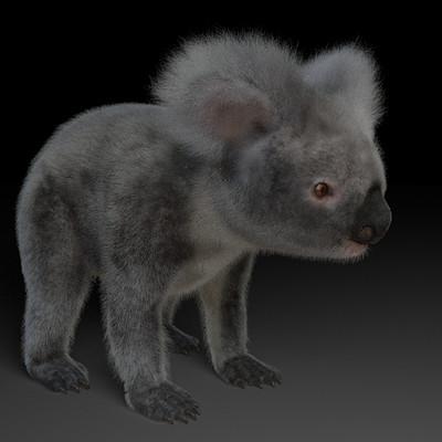 Levon karapetyan koalaas