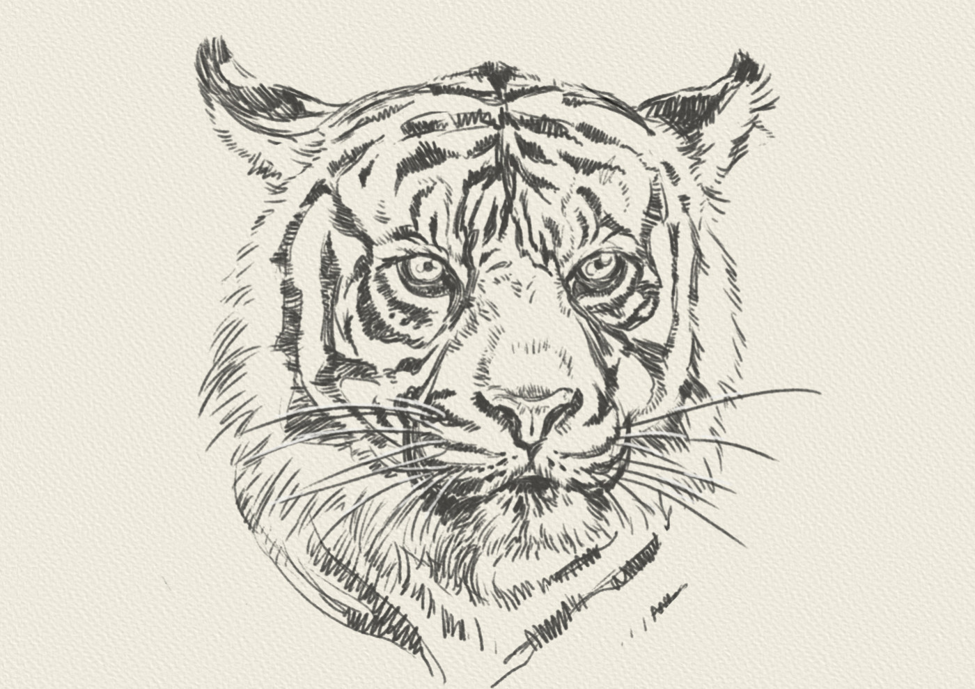 Zoltan korcsok tiger 04 b