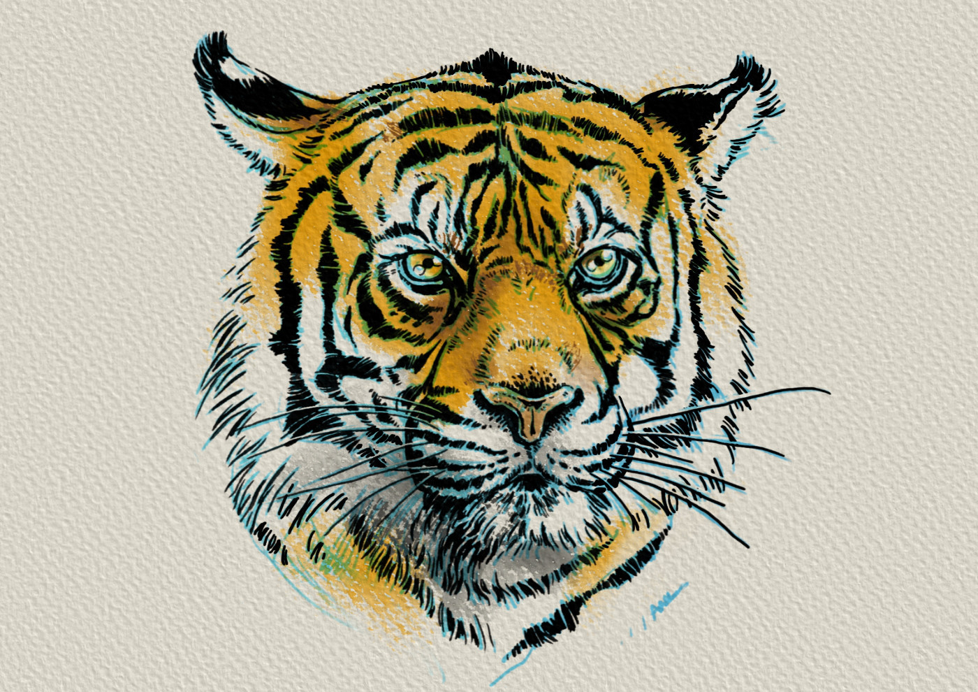 Zoltan korcsok tigerportrait
