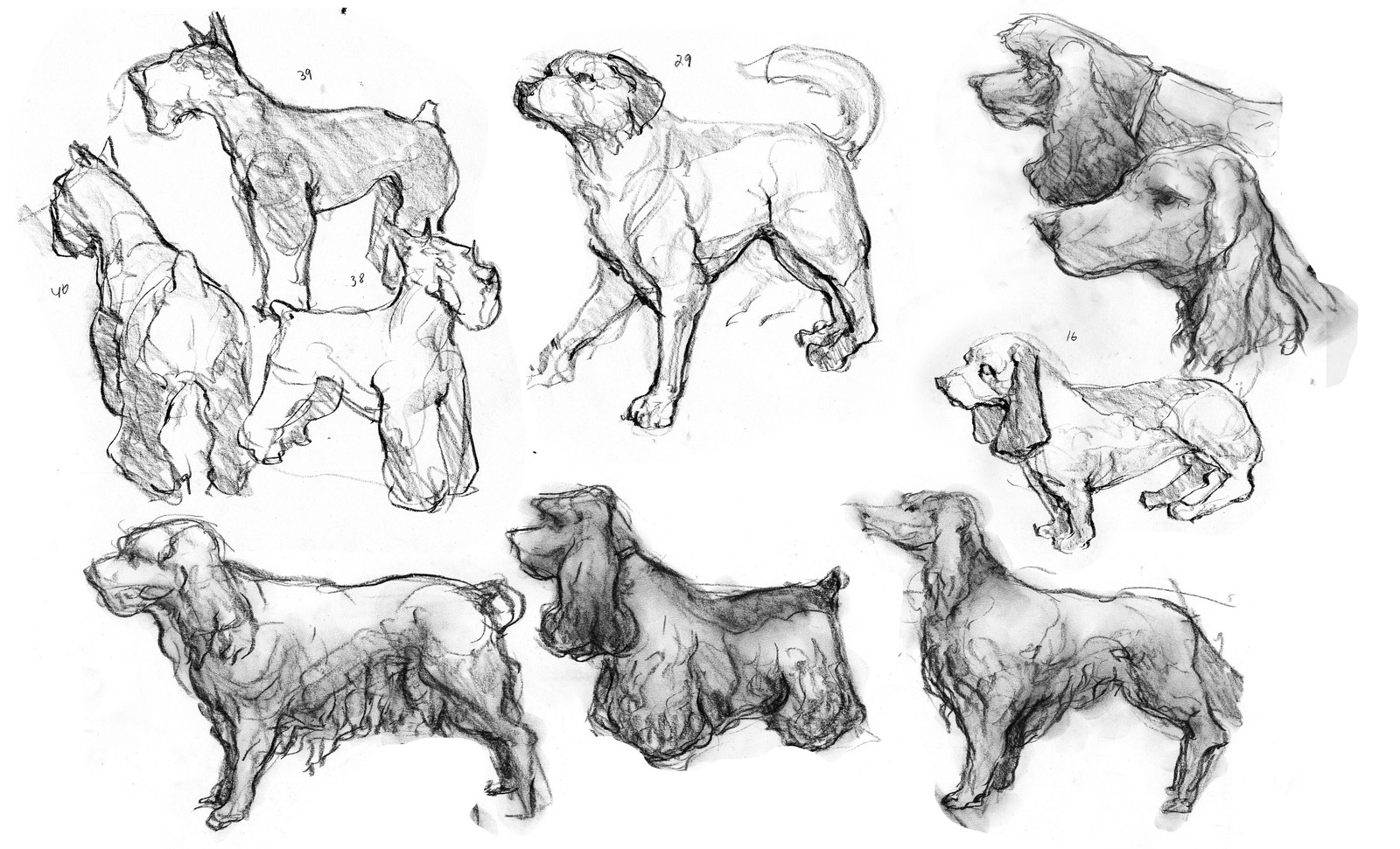 Animal Studies from Life