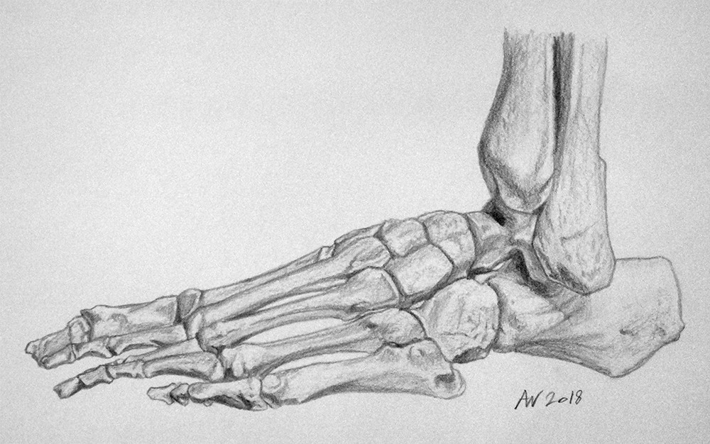 Foot & Toe Bone Study