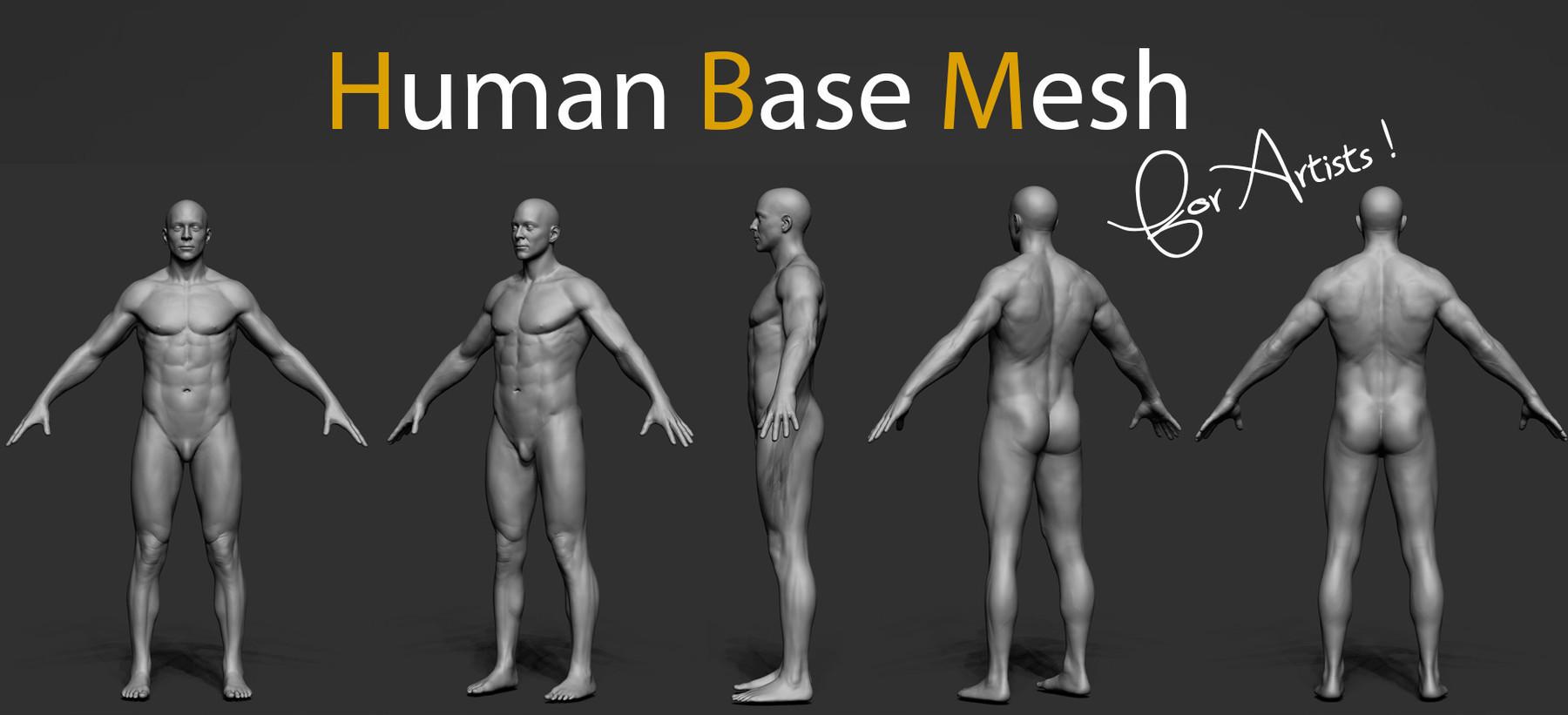 Pascal ackermann human bm img4