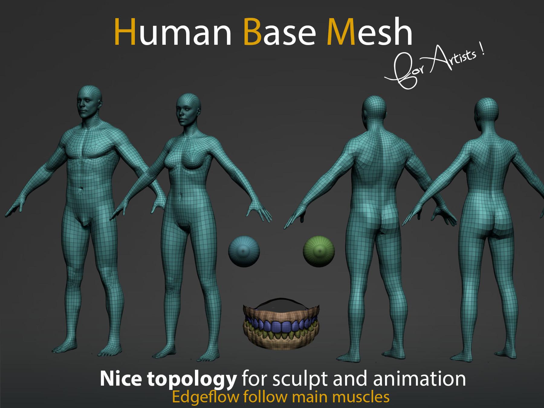 Pascal ackermann human bm img2