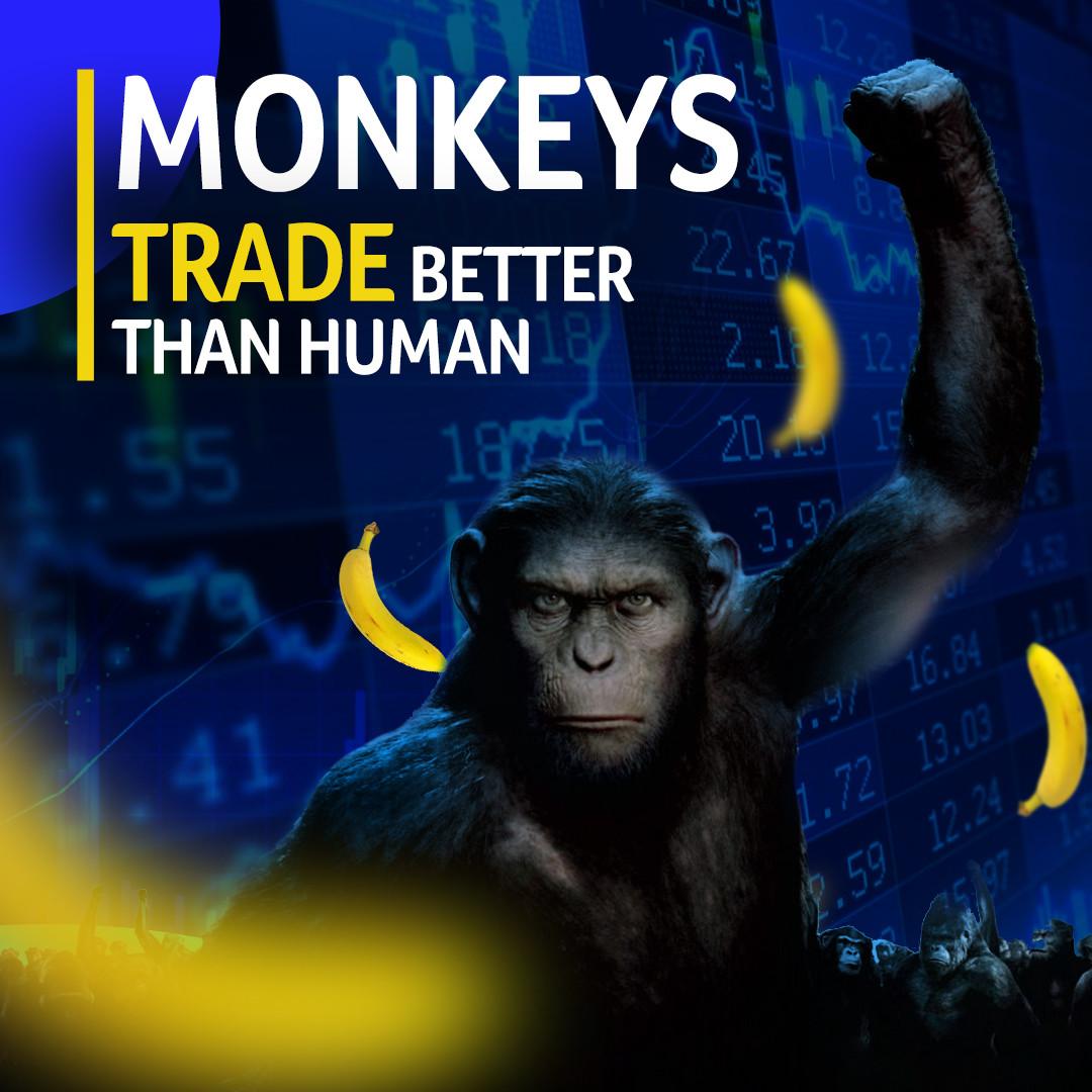 Monkey Trader Social media Banner