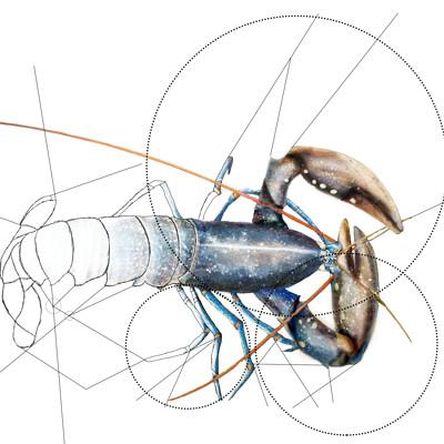 Doriane claireaux homard