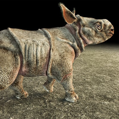 Baby Rhino project: Indian rhino