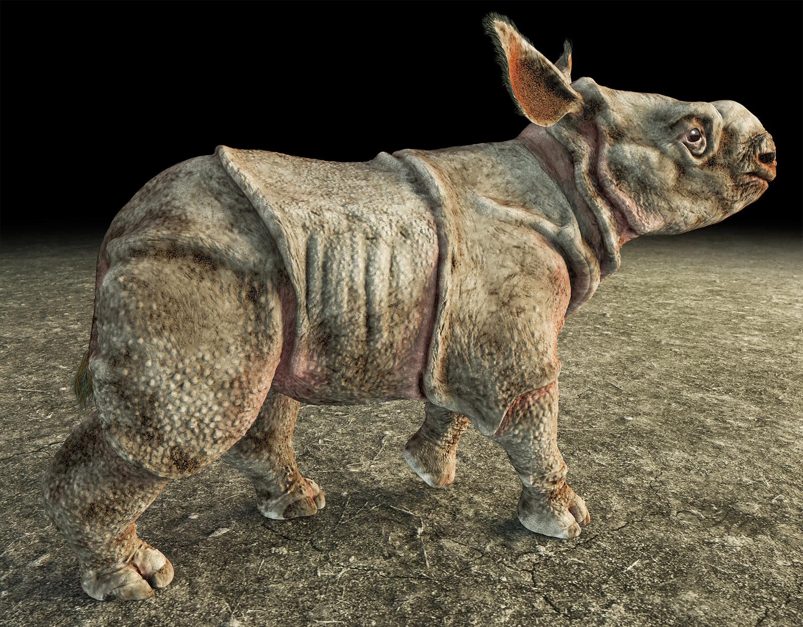Baby Rhino project: Indian rhino
