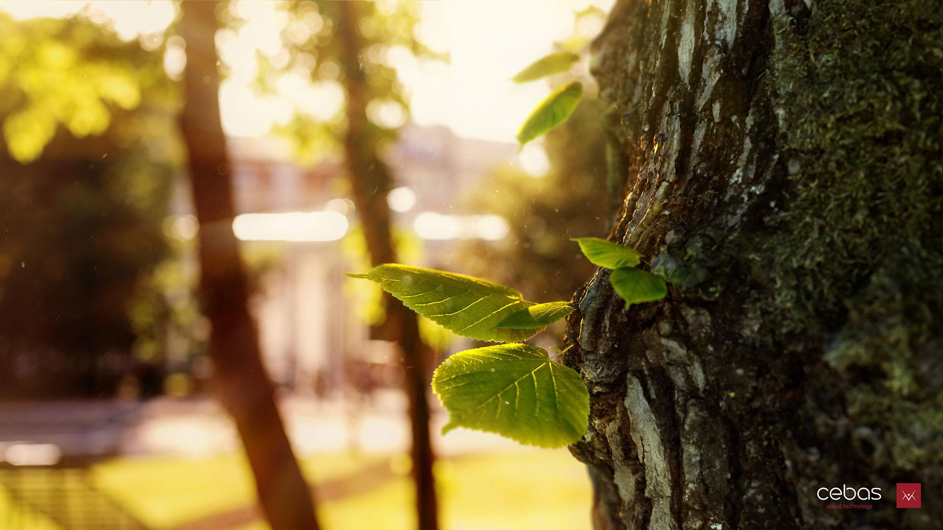 Mihai pandelescu leaf 01