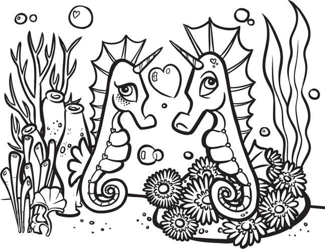 Steve rampton seahorses