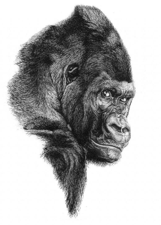 Mieke roth gorilla nhm 768x1075