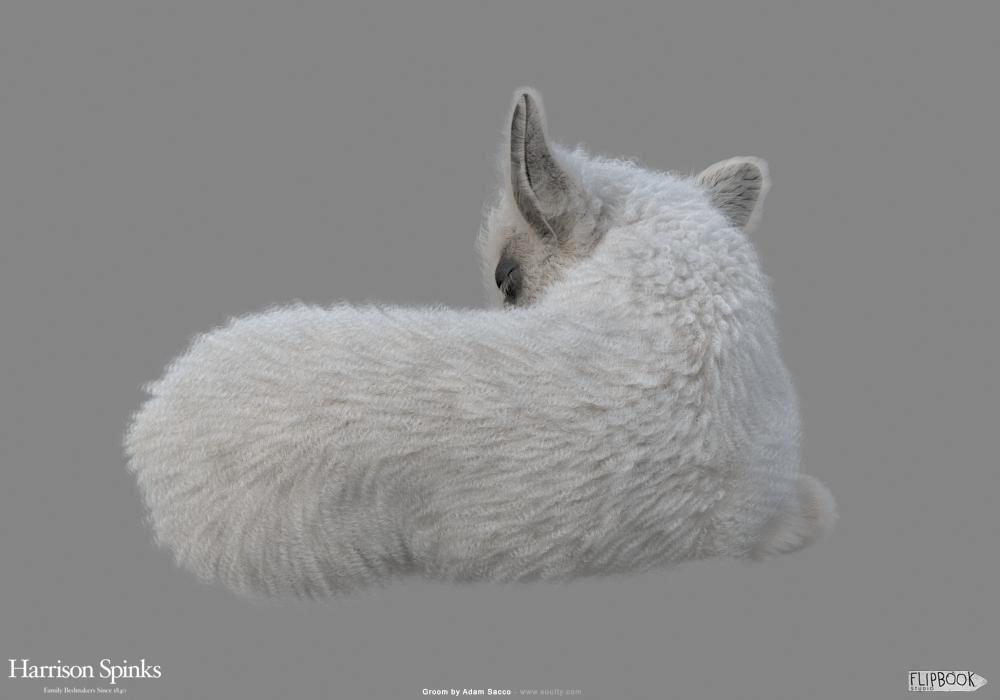 Adam sacco lamb baby groom 0003