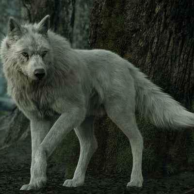 Alireza akhbari wolf