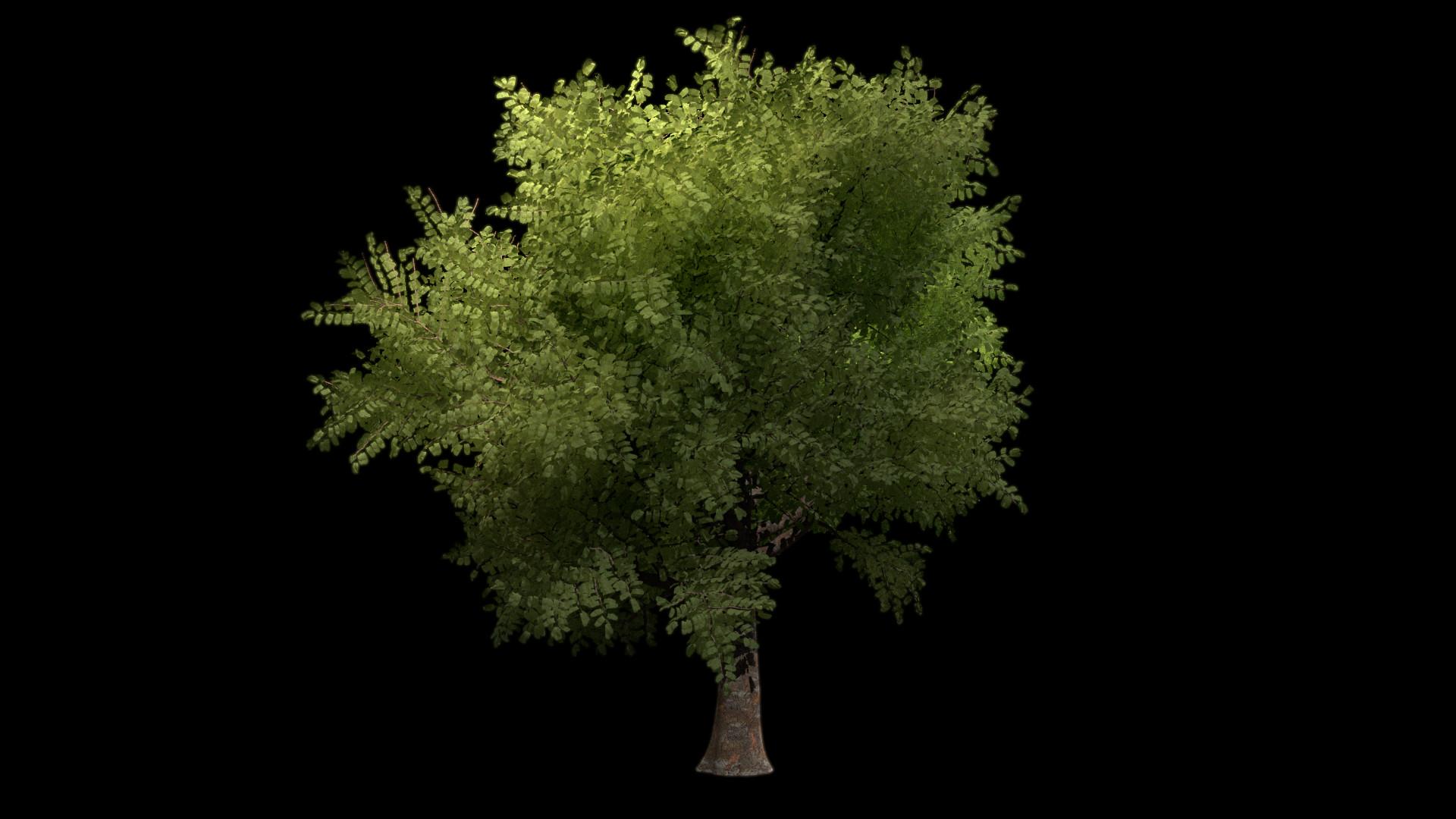 ArtStation - Tree study Speedtree , Némo Courteix