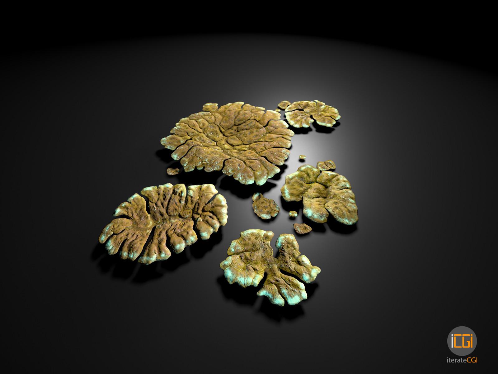 Johan de leenheer alien plant lichen type1 5