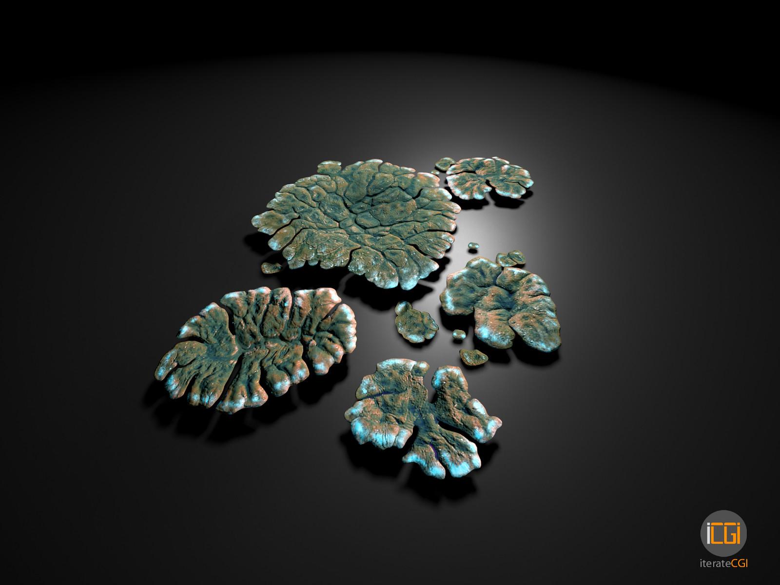 Johan de leenheer alien plant lichen type1 6