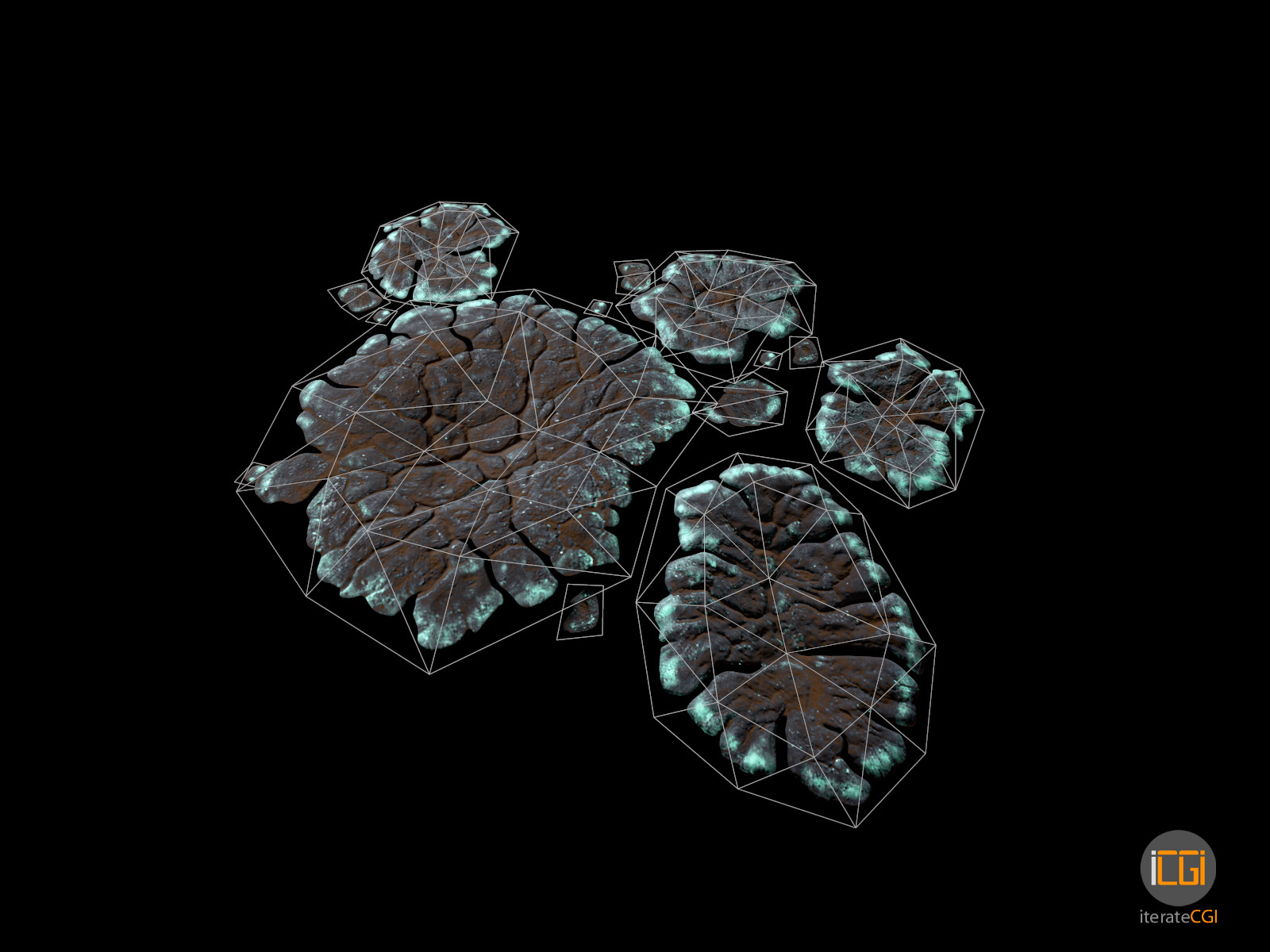 Johan de leenheer alien plant lichen type1 15